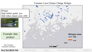 common loon climate change refugia map