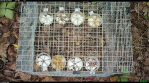 cage of seed trays on forest floor